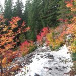 Where to find Fall Colors in Portland